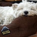 Do not disturb....mosty definitely !  Flora Warburton