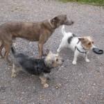 Lloyd, Fynn and Digger Allaway - The Three Muskateers!