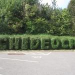 Chideock Hedge