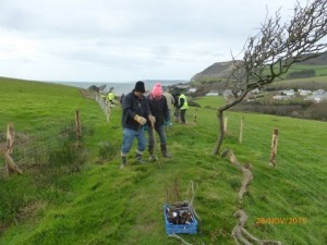 Chideock Society tree planting at East Cliff, Seatown. Nov.2015